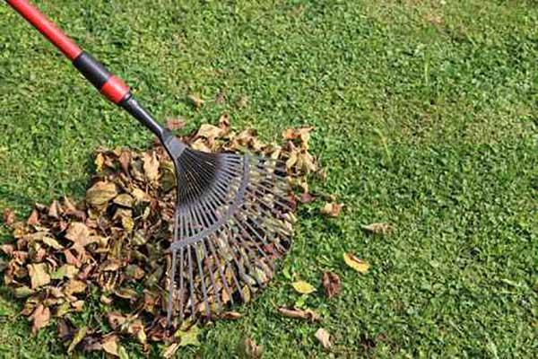 Mantenimiento de Jardines en Madrid limpieza de hojas