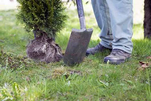 Mantenimiento de Jardines en Madrid cuidado de césped