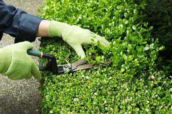 Mantenimiento de jardines en madrid sotoser for Mantenimiento de jardines