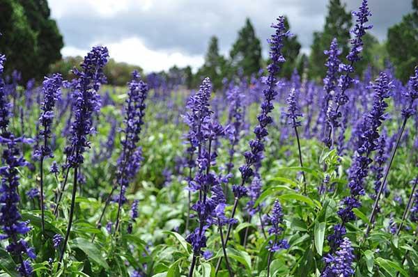 5 plantas de exterior para que tus jardines huelan bien for Plantas de exterior