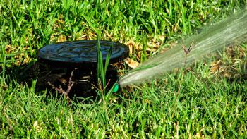 Mantenimiento de jardines madrid sotoser servicios - Mantenimiento de un jardin ...