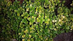 plantas-de-exterior-2