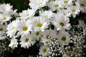 margaritaflowers-200602_1920